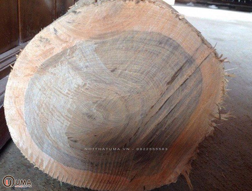 Gỗ bách xanh là gì? Ứng dụng của gỗ bách xanh trong nội thất, , , Chất liệu, Tin Tức